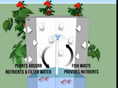 Lettuce Evolve Aquaponic Planter Plans a Buy-One-Give-One-Away Business Model (Video) | Sustainable Futures | Scoop.it