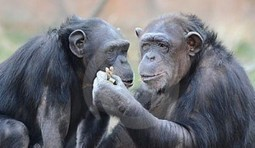 Monkey Business: Peanuts Rate as a Top Antioxidant | Health Fitness Elite | Scoop.it