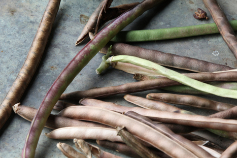 About Afroculinaria | Ethnobotany: plants and people | Scoop.it