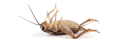 It's bugging me, what will be the big trends in insect protein? | Entomophagy: Edible Insects and the Future of Food | Scoop.it