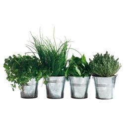 10 manières de préserver ses herbes aromatiques   Finis ton assiette   Scoop.it