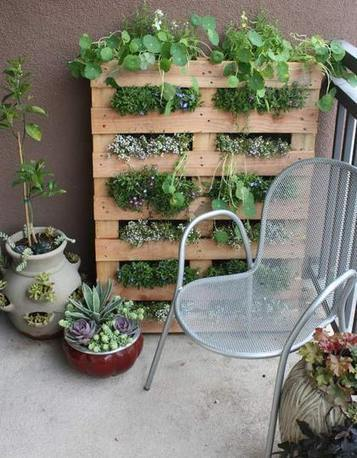 Gardening Without a Garden:  10 Ideas for Your Patio or Balcony   Renters Solutions | Home and Lifestyle | Scoop.it