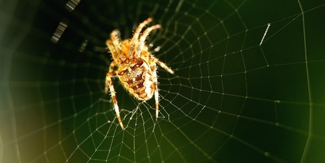 Spider Facts vs. Myth | Teacher Tools and Tips | Scoop.it