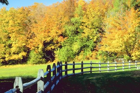 Fall in Virginia | The Miracle of Fall | Scoop.it