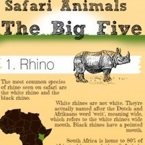 Safari Animals - The Big Five   Visual.ly   Animals   Scoop.it