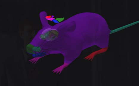 A Simulated Mouse Brain in a Virtual Mouse Body | DigitAG& journal | Scoop.it