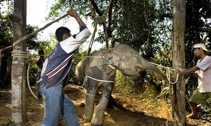 Pétition : Pour arrêter la maltraitance des éléphants | 16s3d: Bestioles, opinions & pétitions | Scoop.it