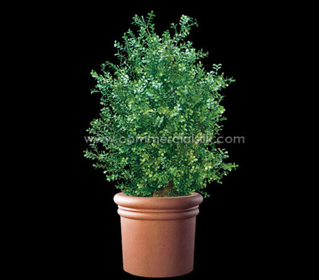 Artificial Boxwood Plant | Home Improvement - Landscaping | Scoop.it