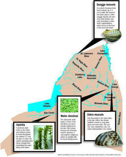 Invasive threat: Potentially harmful species travel throughout state's waterways - Glens Falls Post-Star | Invasive species | Scoop.it