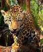 Animals in Paraguay   Paraguay, Bria Reynolds   Scoop.it