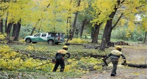 Las sacas de madera para biomasa reducen un 60% el riesgo de ... - levante.emv.com   Energía y Renovables   Scoop.it