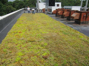 Long Island Green Roofs Take Direct Hit from Super Storm - One Year after Sandy - Greenroofs.com | GreenRoofs | Scoop.it
