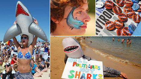 A #sharkcull divides a nation | Rescue our Ocean's & it's species from Man's Pollution! | Scoop.it