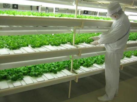 富山市に建設予定のエゴマの栽培を目的とした完全人工光型植物工場に ... | 植物工場 | Scoop.it