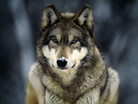 Comparativa de piensos | Comparativa de piensos para perros | Pienso Acana | Pienso Royal Canin | Pienso Advanace | Pienso para perros | Marcas de pienso para perros | EUDOG | Scoop.it
