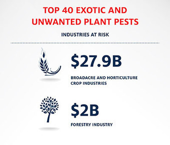 Australia's Top 40 National Priority Plant Pests | Pest risk analysis | Scoop.it