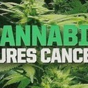Pushing 80 and given two weeks to live, dying patient cures himself using cannabis | Plant Based Nutrition | Scoop.it