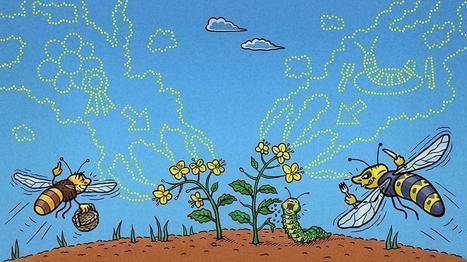 A l'encontre d'idées reçues sur la botanique | Veille en dilettante | Scoop.it