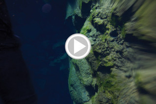 7 Freshwater Dive Sites to Explore | DiverSync | Scoop.it