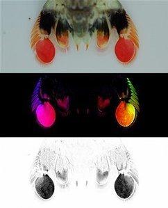 Experts decode secret polarisation language   De Natura Rerum   Scoop.it