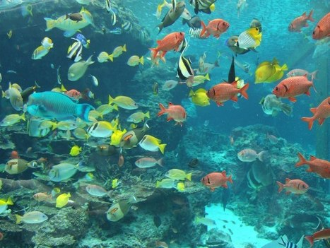 Shocking – 98 percent of Marine Fish Die Each Year En Route to Aquariums | Fish | Scoop.it