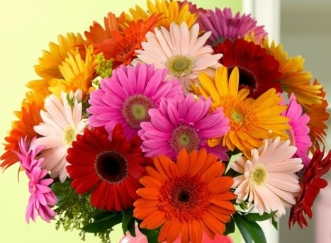 Dpetals: Which flowers are gifted to friends on Friendship Day? | singapore florist | Scoop.it