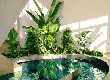 Interior Plant Service Minneapolis | Interior Office Plants | Scoop.it