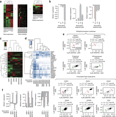 Human induced pluripotent stem cell-derived cardiomyocytes recapitulate the predilection of breast cancer patients to doxorubicin-induced cardiotoxicity | Genomic and precision medicine | Scoop.it
