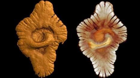 Une découverte qui peut révolutionner l'histoire de la vie sur Terre - Sciences - MYTF1News | Gabon | Scoop.it