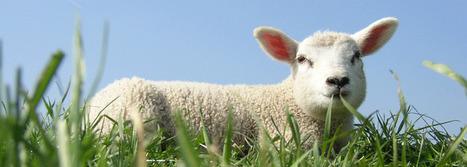 pmaf point org - Le site de la Protection mondiale des animaux de ferme | Shabba's news | Scoop.it