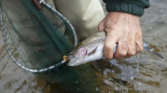 New Book Critical Of Trout Fishing - Hartford Courant   Aquaculture Products & Marketing Network   Scoop.it