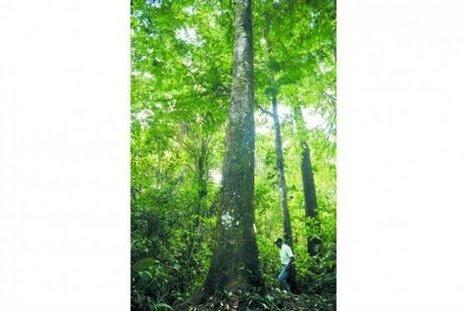 El Guaviare y su lucha contra la deforestación | Regiones y territorios de Colombia | Scoop.it