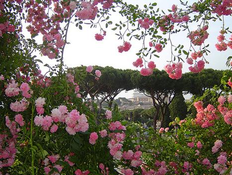 Roseto comunale di Roma: aperture gratuite 2014 - Romeguide: i migliori eventi a Roma | Guest House in ROME | Scoop.it