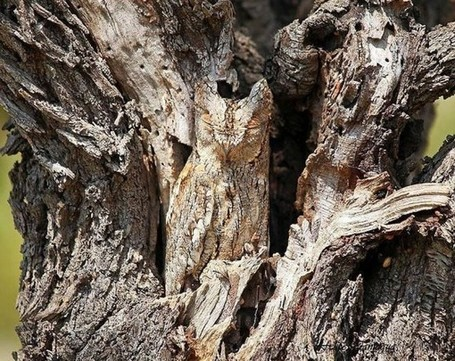 Invisible Animals: Incredible Examples of Animals Camouflage | The Wondrous Design Magazine | Africa and Beyond | Scoop.it