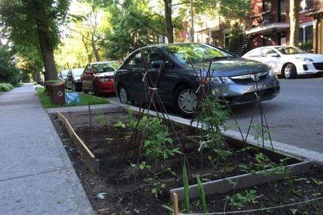 Stratégie d'agriculture urbaine: Potagers, jardins de la biodiversité et ... | biodiversité en milieu urbain | Scoop.it