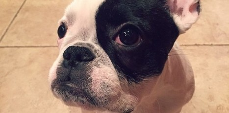 NuVet Reviews : Brushing Your Dog's Teeth | nuvetlabs reviews | Scoop.it