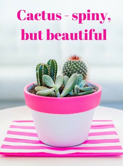 Cactus - spiny, but beautiful | home | Scoop.it