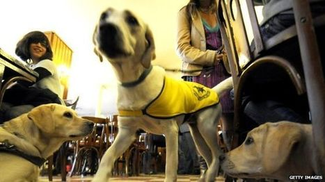 Uber drivers accused of turning away guide dogs - BBC News   Peer2Politics   Scoop.it