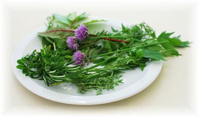 Herb Garden Information | In the garden | Scoop.it