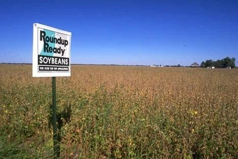 Study: Roundup herbicide damages sperm   www.paleomessenger.com   Scoop.it