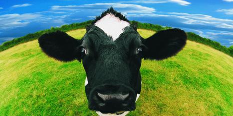 10 raisons de changer radicalement notre manière de faire de l'élevage | Actu Agri Bio | Scoop.it