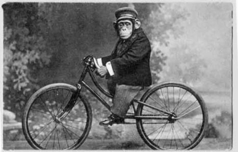 Elogio a la evolución | Bicicletas | Scoop.it