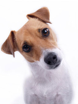9 Things Your Dog Wants to Tell You | Best Flea Treatment for Dogs | Scoop.it