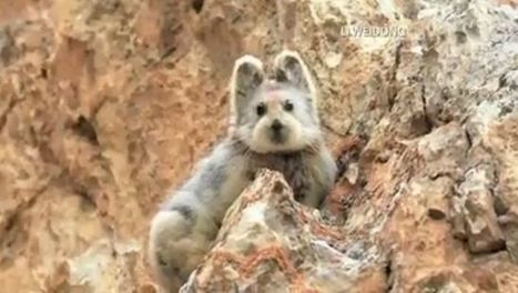 World's cutest endangered animal photographed for first time in over 2 decades | #MNN #biology | Limitless learning Universe | Scoop.it