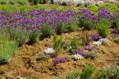 SPHAIGNE DE MADAGASCAR ET BRANDE DE BRUYERE : Des produits naturels pour le paysage | HORTICULTURE BOTANIQUE | Scoop.it