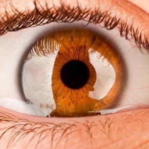 Vida y Salud » Un procedimiento nuevo para tratar la perforación de la cornea   CIENCIA Y SALUD   Scoop.it