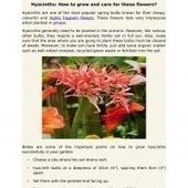 Hyacinth Flower Bulbs - The Perfect Beauty Of Your Garden | Flower Bulbs | Scoop.it