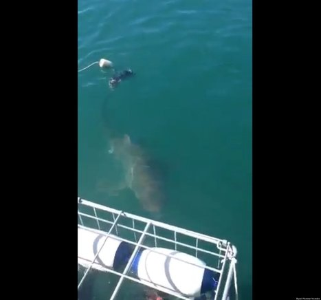 WATCH: Shark Gets REALLY Close To Divers | Xposed | Scoop.it
