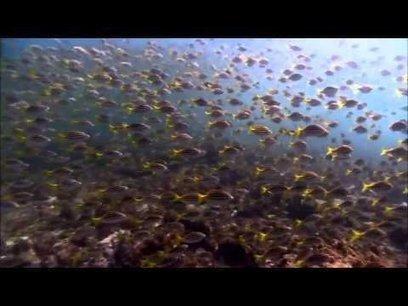 Ensemble, faisons entendre la voix de l'Océan ! | Rays' world - Le monde des raies | Scoop.it