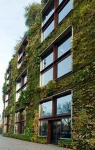 [astuce] Comment entretenir un mur végétal ? | La Revue de Technitoit | Scoop.it
